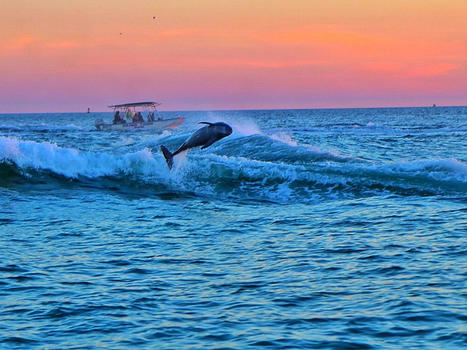 Dolphin cruise at sunset