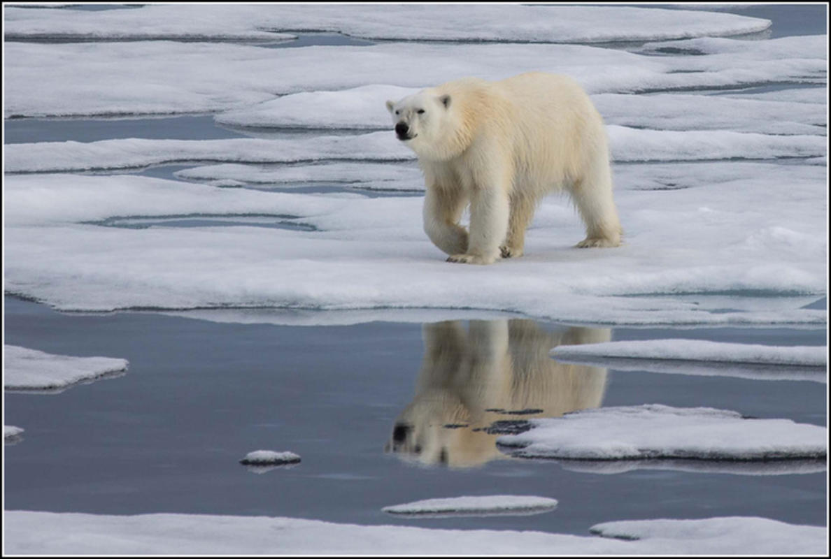 """Reflections of a Polar Bear"" by Smudge9000 via Flickr Creative Commons"
