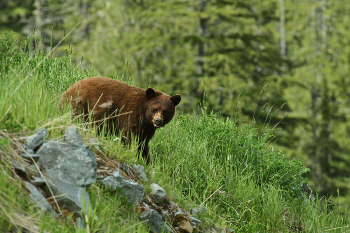 """Just the Bear Necessities"" by Mike via Flickr Creative Commons"
