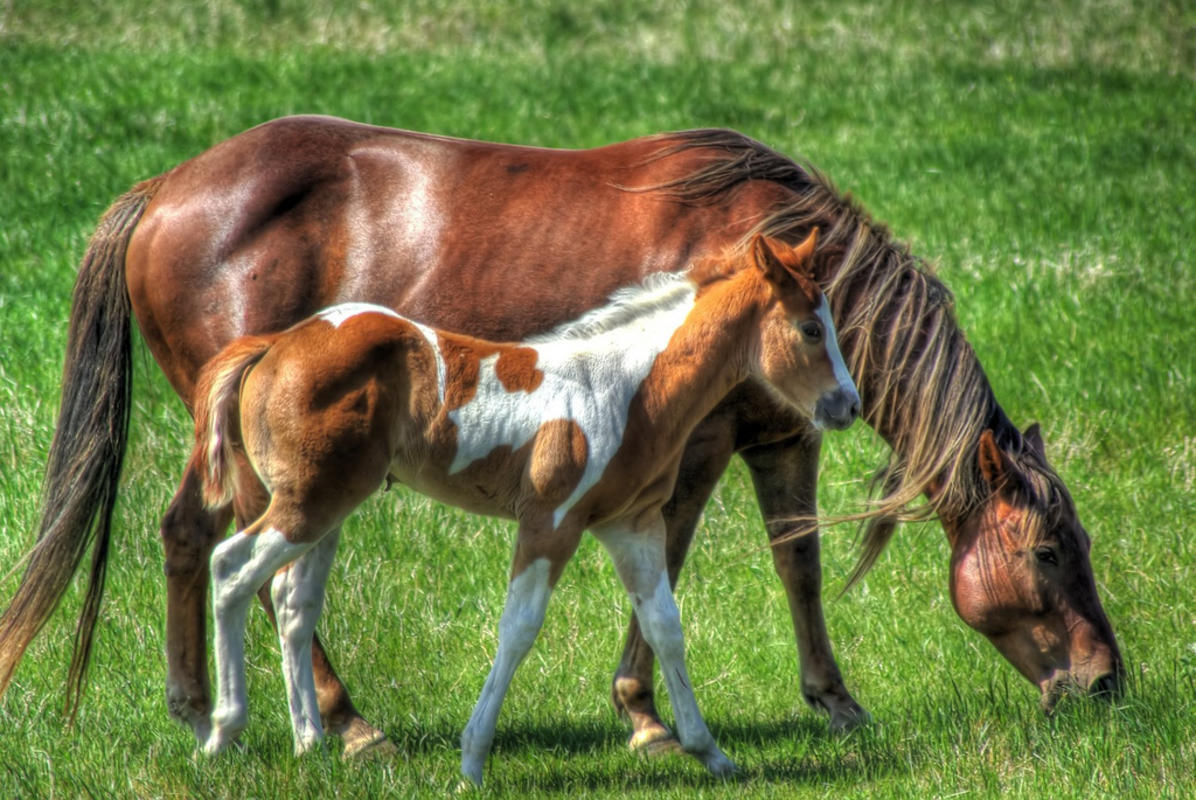 Colt and Mare by Glen Munro via Flickr Creative Commons
