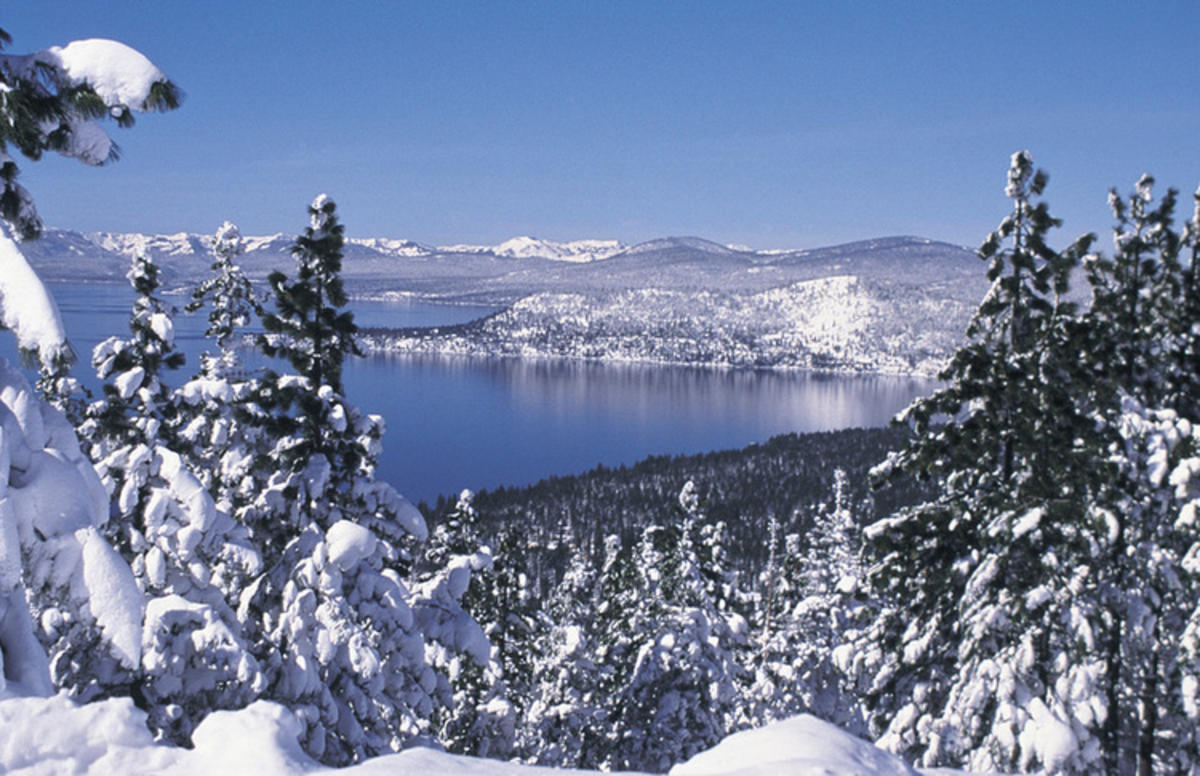 """Lake Tahoe Winter Trees"" by Reno Tahoe via Flickr Creative Commons"