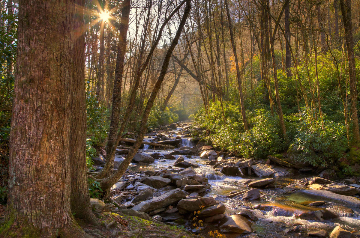 Stream in the Smoky Mtns by Phil Horton via Flickr Creative Commons