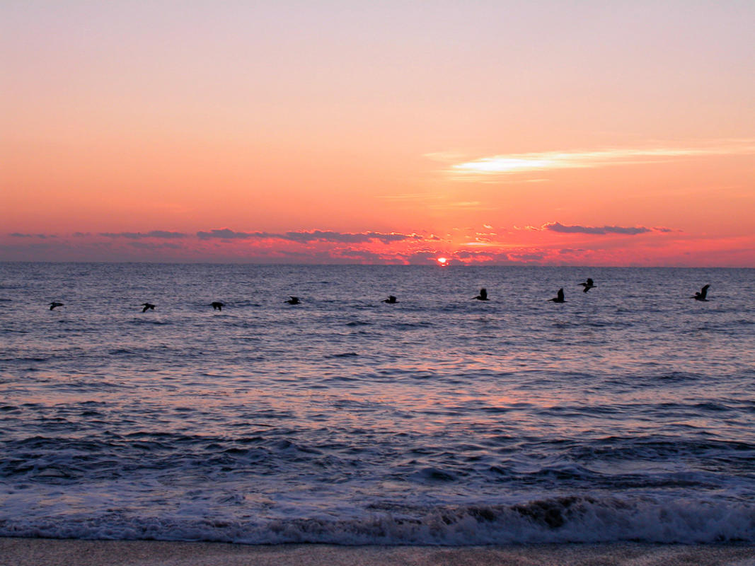 Sunrise and Pelicans at Kure Beach Photo by Wilmington and Beaches Convention & Visitors Bureau