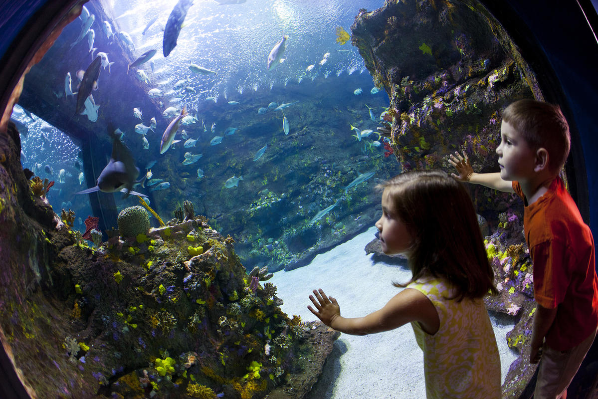 Kids at NC Aquarium Photo by Wilmington and Beaches Convention & Visitors Bureau