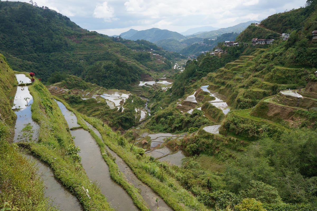"""Banaue Rice Terraces"" by Andrew Smith via Flick Creative Commons"