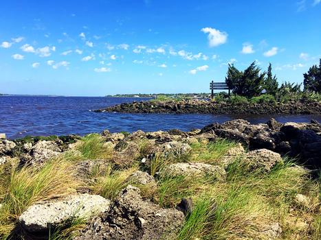 Carolina beach state park 001