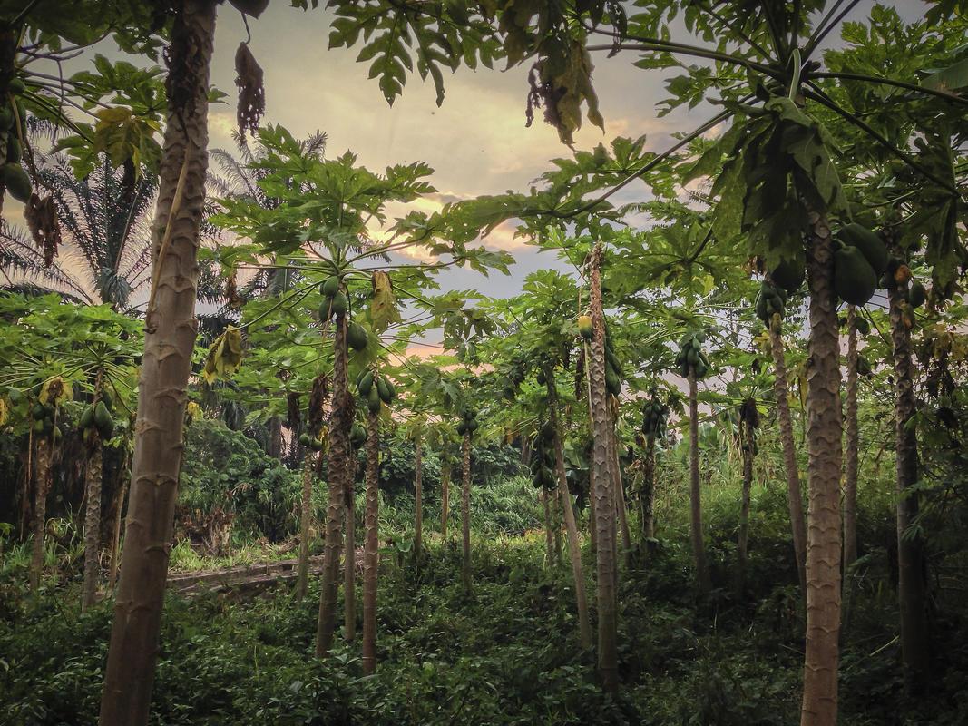 JosephKing-20140228-DRC2014-2014-02-28 17.32.12 HDR Photo by Joseph King via Flickr Creative Commons
