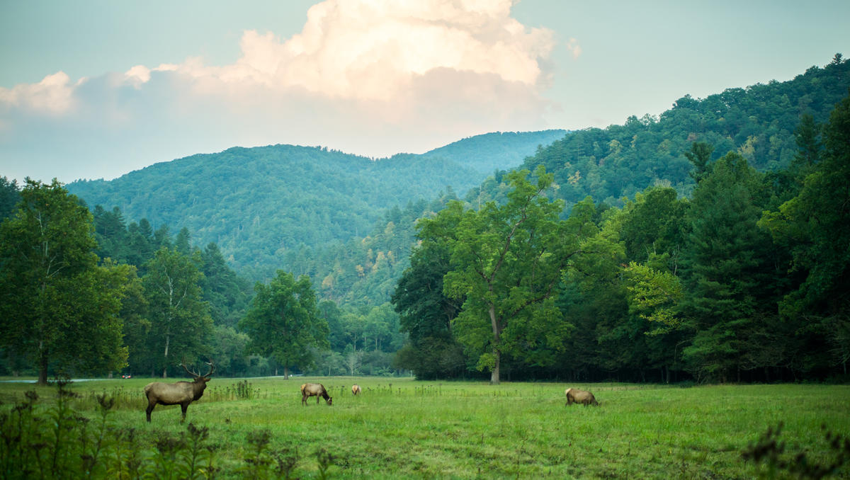 Photo courtesy Haywood County Tourism