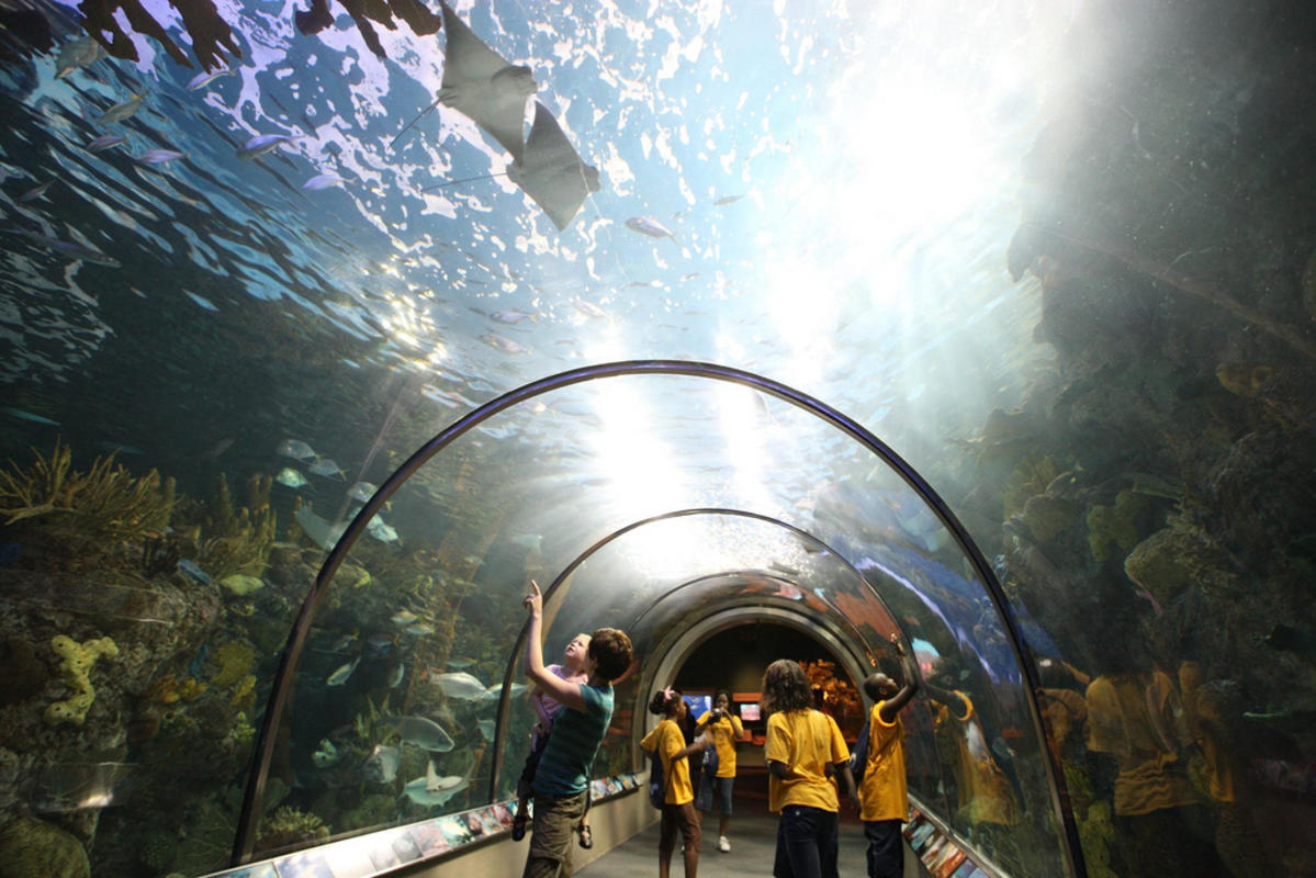 Audobon Aquarium Photo by Louisiana Travel via Flickr Creative Commons