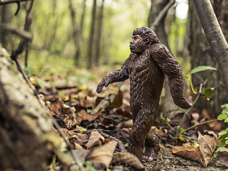 Bigfoot 542546 1920