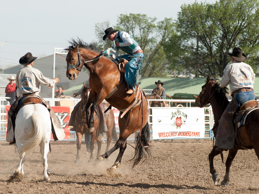 Photo credit: Miles City Bucking Horse Sale, Montana Office of Tourism and Business Development
