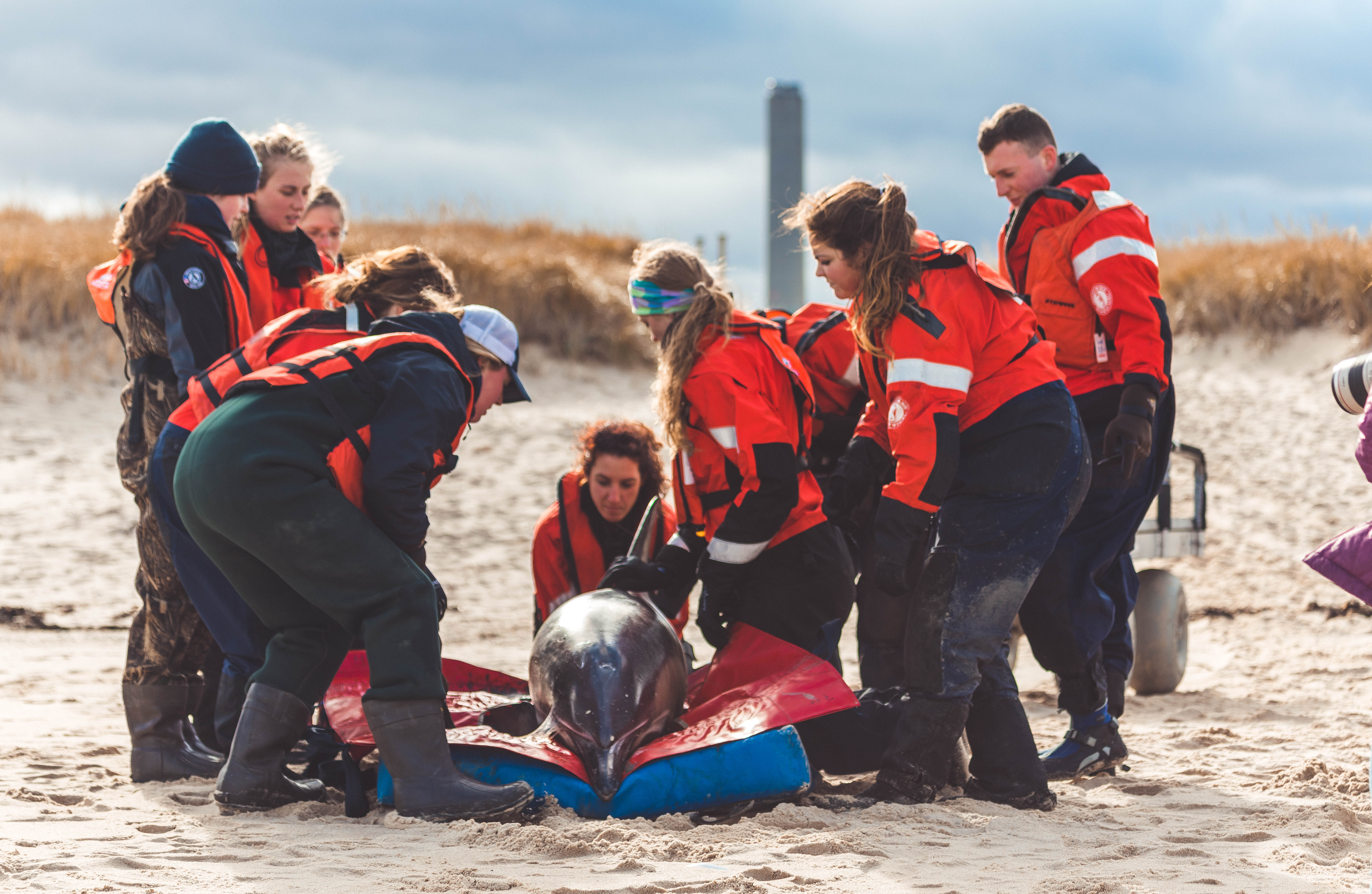 Marine Mammal Rescue & Research Team