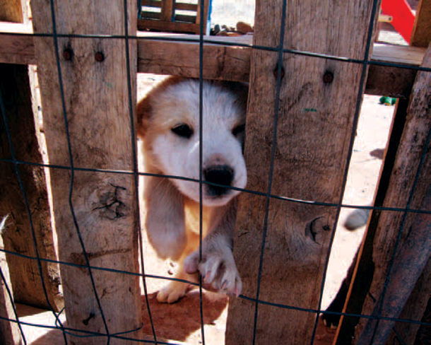Puppy mills flourish online while federal agencies are poorly equipped to monito
