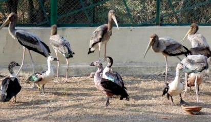The team members of Raksha rescued over 270 birds at their makeshift camps.