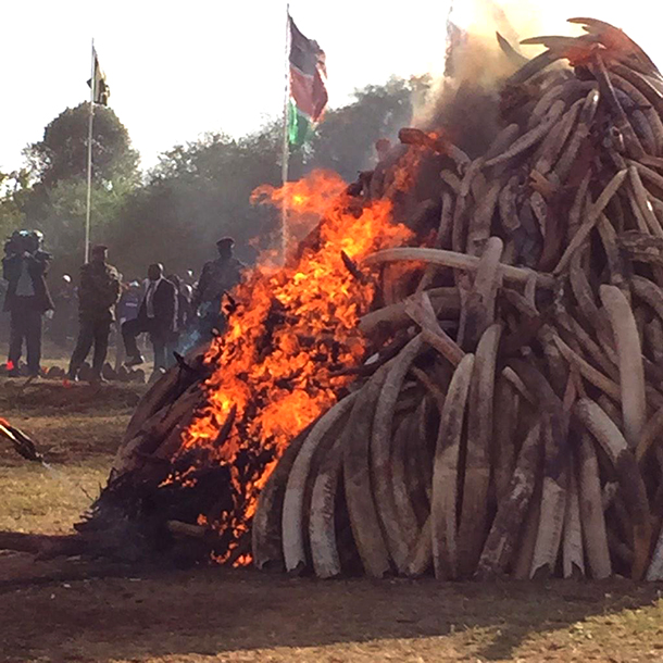 IFAW has been instrumental in the planning and execution of some of these burns,