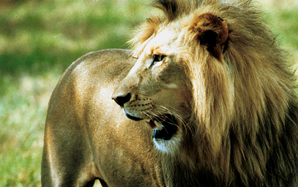 The ban on importing lion trophies reflects the Australian public's abhorrence t