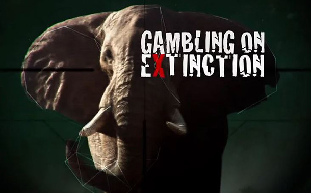 Gambling on Extinction is a film that highlights the atrocities of the illegal w