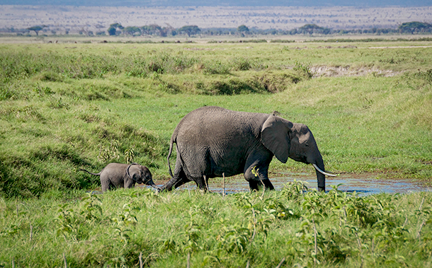Building a brighter future for elephants at Amboseli National Park