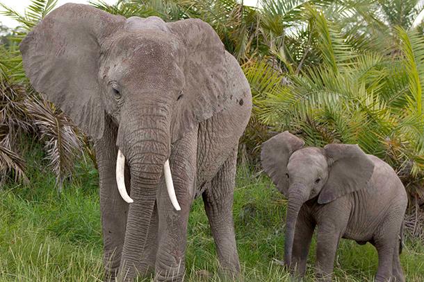 Oregon bill SB 913 would make trading animal parts including elephant ivory, rhi