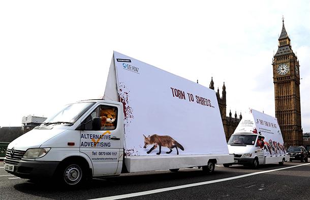 Chasing through London to save wildlife