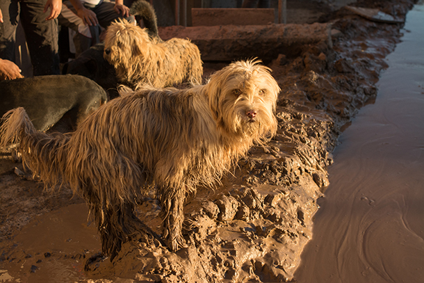 Hundreds of small animals and thousands of large animals lost their lives in the