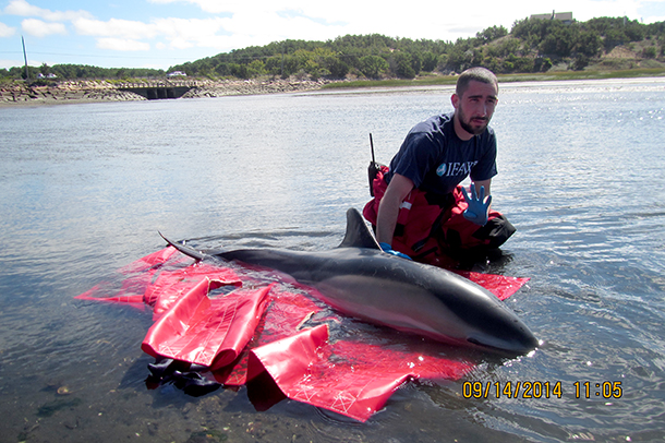 Back in September, an IFAW responder Nathan DiMartino cares for one of the dolph