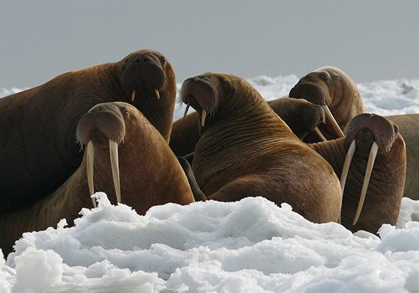 La hausse des températures a déjà lourdement affecté des milliers d'espèces, don