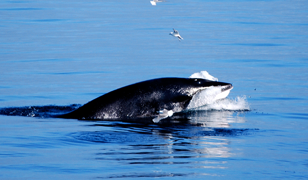 The strong partnership between IFAW and Icewhale has helped to opened the eyes o