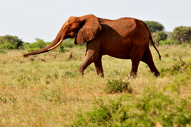 Dallas Safari Club announced that a hunting package including an elephant kill w