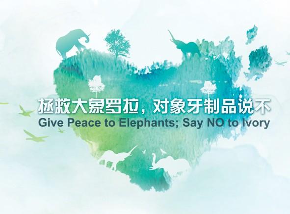 """非洲大象罗拉""""抵京"""",亲自代言大象保护"""