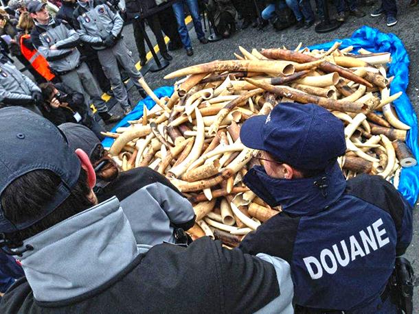 法国销毁3吨非法象牙