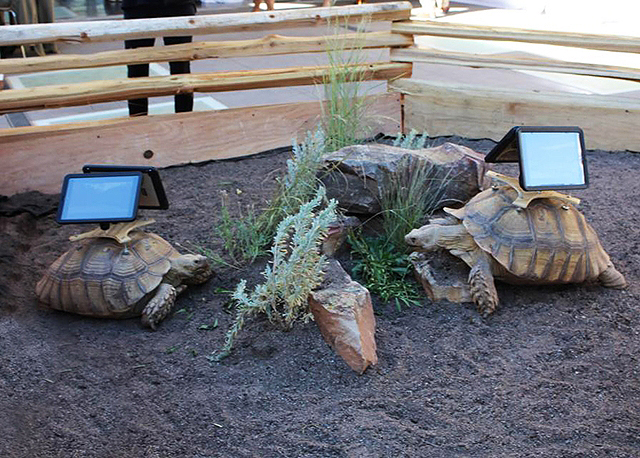 Living tortoises do not make good art