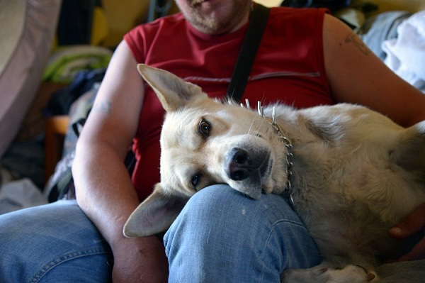 Coming to the aid of disadvantaged persons and their dogs in France