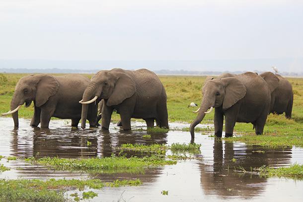 Le choix de pas perturber le cours naturel de la vie chez les éléphants