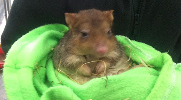 Kanyana Wildlife Rehabilitation Centre cares for West Australia's wildlife.