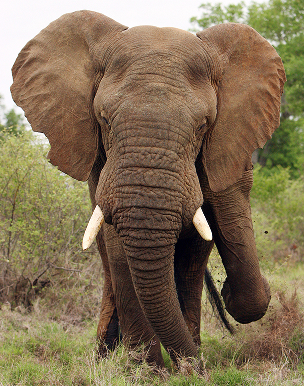 IFAW discusses ivory poaching's devastating impact at AZA Conference.