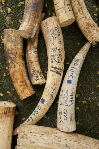 The dramatic need for the training was underlined earlier in the week when Tanzania, who sent two officers to the training, seized 1,041 elephant ivory tusks.
