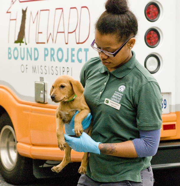 A young tornado survivor, sent from the over-burdened Tulepo Humane Society, arrives in D.C. in May. Many of these fortunate dogs have found their forever homes.