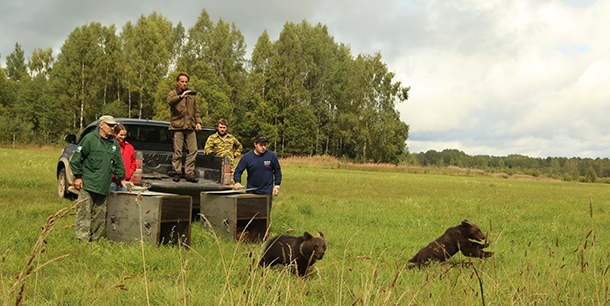 The Orphan Bears Rehabilitation Center releases six bears into the Russian wild.