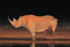 U.S. Fish and Wildlife Service allows permits for Namibia black rhino trophies