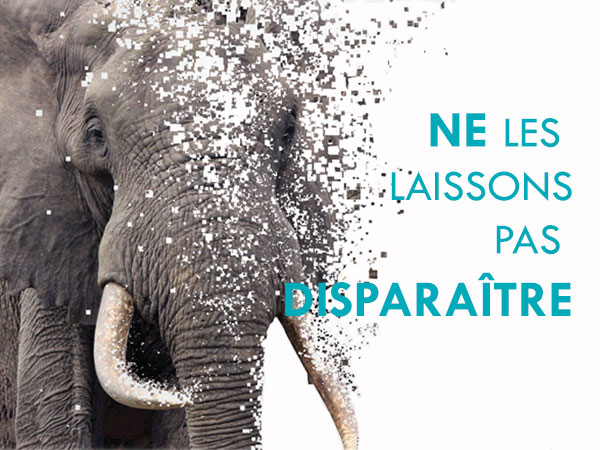 Commerce de l'ivoire : IFAW alerte le public les 2 et 3 décembre prochains à l'o