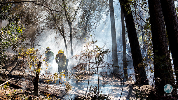 Firefighters respond to wildfires in Butte County, California earlier this year.