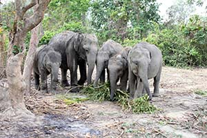 Arrival of hand-reared elephant calves to contribute to national park's resurgen