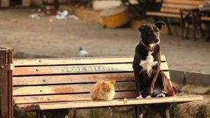 Apprendre la compassion grâce aux chiens et aux chats : le nouveau programme éd
