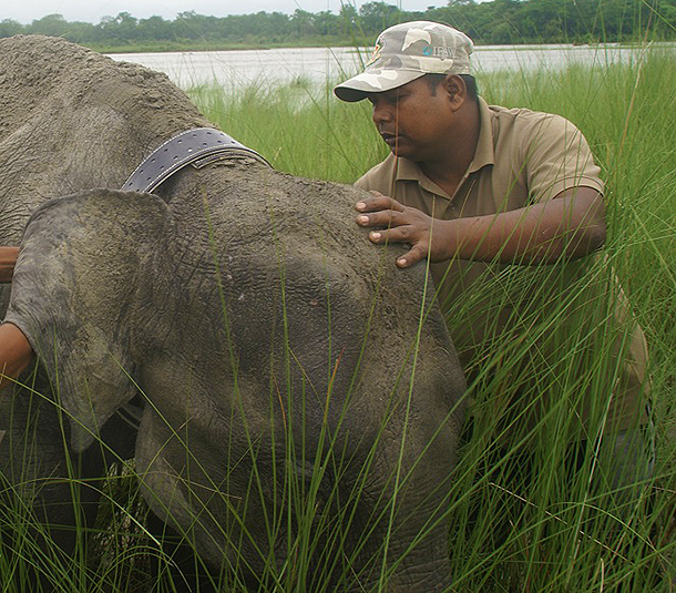 Spotlight India: Not easy finding an elephant family in the wild
