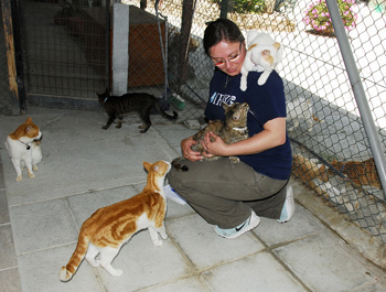Shannon Walajtys visiting a cat shelter in Cyprus.