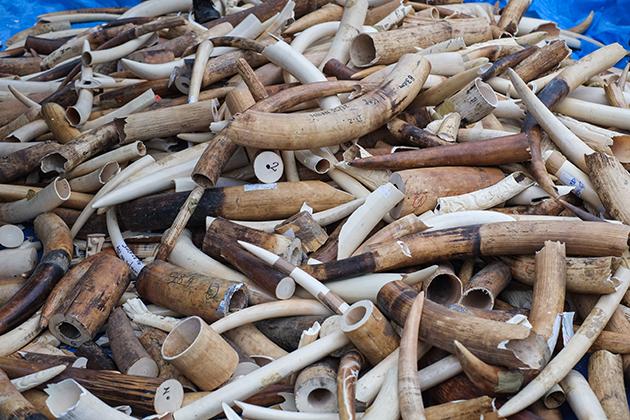CITES: Doppelmoral beim Artenschutz?