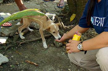 Au secours des animaux touchés par le séisme meurtrier aux Philippines