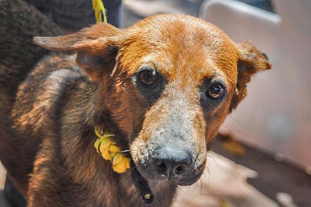 Campagne de vaccination à Playa del Carmen : plus d'un millier de chiens et de c
