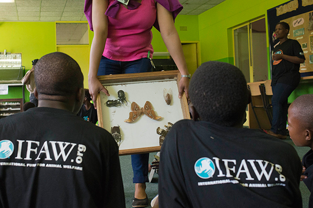 Spotlight South Africa: teaching the inaugural World Wildlife Day class